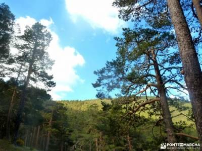 Siete Picos[Serie clásica]:Sierra del Dragón;parque natural sierra norte de sevilla senderismo cas